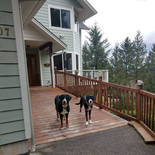 Picture of House requiring House Sitter at House Sitters America, USA. Location North Bend, Washington 98045