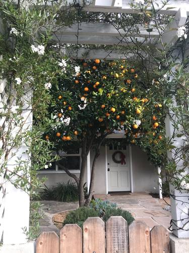 Picture of House requiring House Sitter at House Sitters America, USA. Location Ojai, California 93023